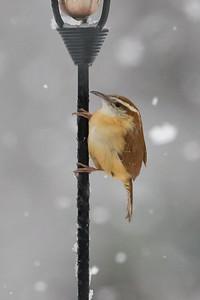 BirdsSnow030613-4979