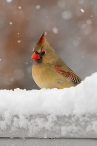 BirdsSnow030613-5002