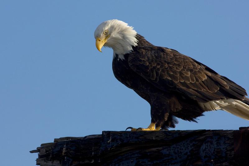 Eagle07971-8x12