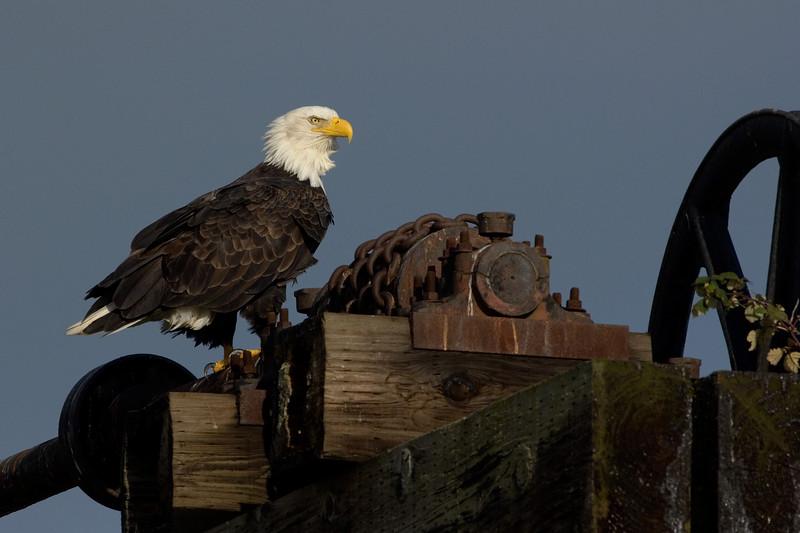 Eagle07982-8x12