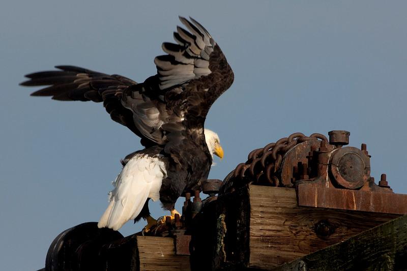 Eagle07991-8x12