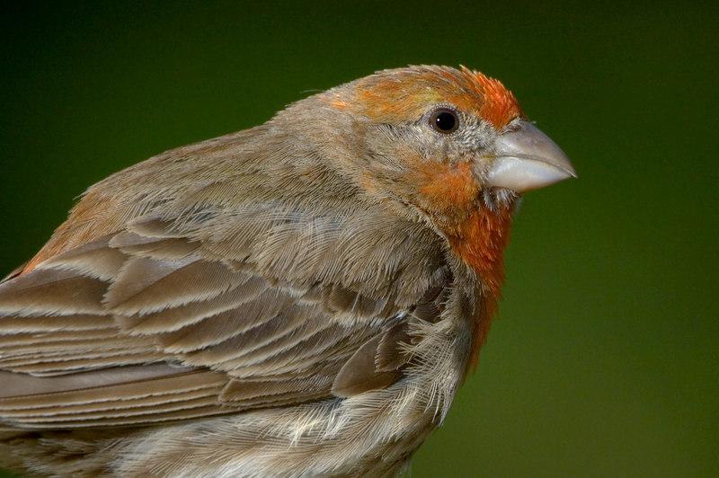 Finch24498-8x12