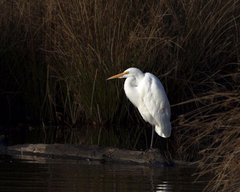 egret-467a