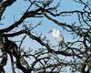 egret-513a