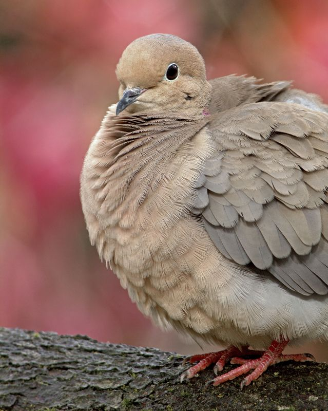 Dove - 2963