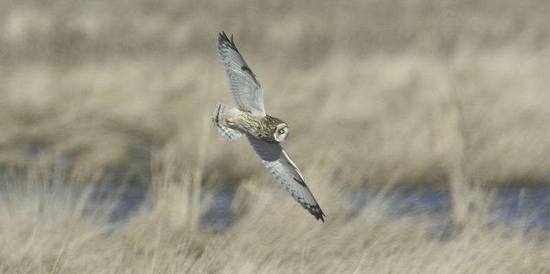 owl3388-6x12