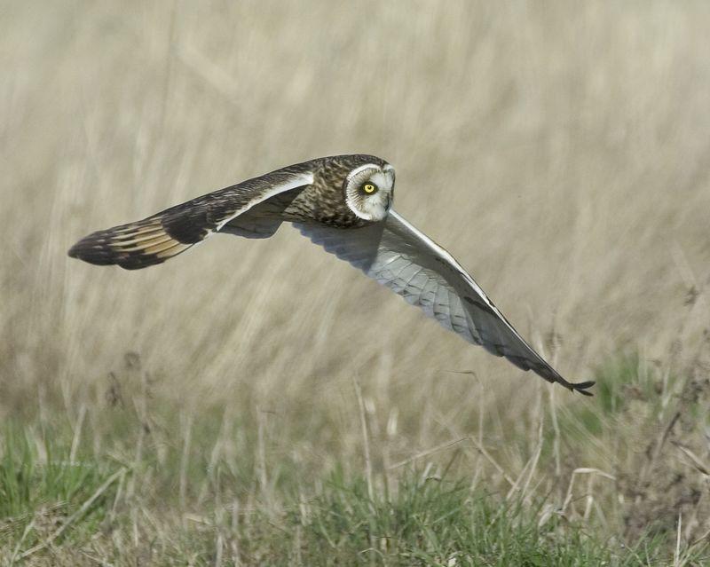 Owl3419-8x10