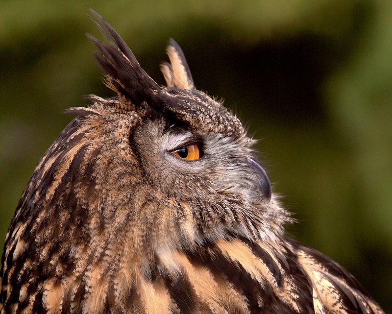 e-owl3050-16x20