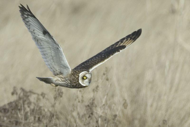 owl3418-8x12b
