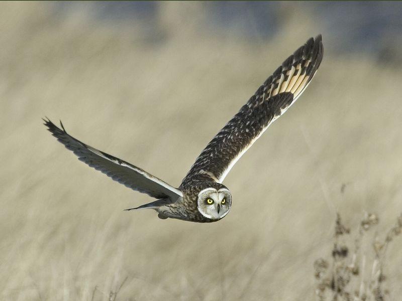 Owl3416-18x24