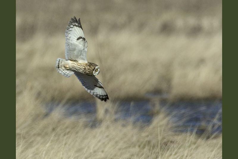 owl3389-10x15