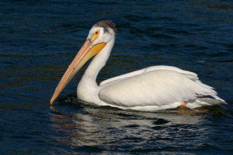 Pelican20370-8x12