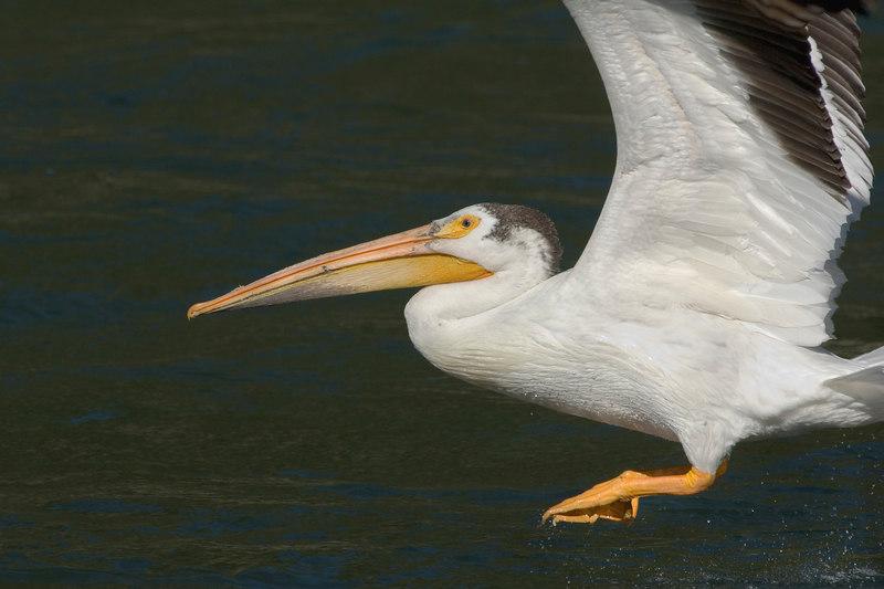 Pelican20467-8x12