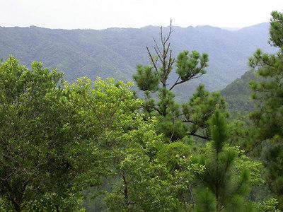 Belize:  Mountain Pine Ridge