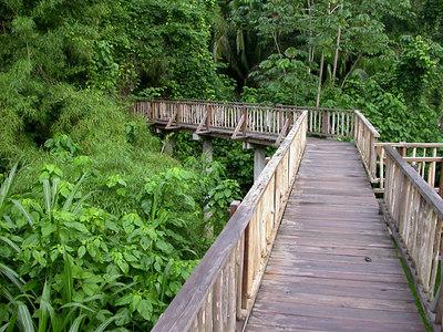 Belize:  Pook's Hill