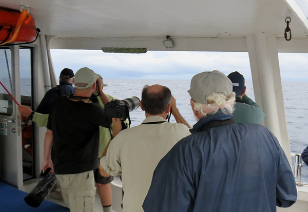 This is part of our group of birders looking for Cahows.  The man in the blue jacket is David Wingate.  He is credited with the rediscovery of Cahows after they were thought to be extinct for 300 years.  He has dedicated his life to bringing them back from extinction.