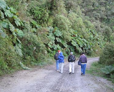 Ecuador 2008:  Yanacocha Reserve