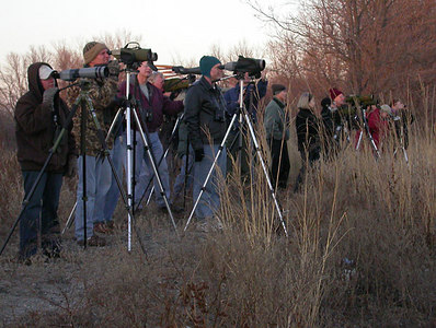 MN birders looking at Slaty-backed Gull