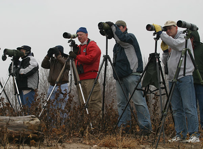 Birders at Sandpiper Beach, Saylorville Lake, looking at the Black-tailed Gull  11-18-07