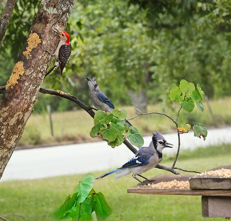 Le Avian Cafe