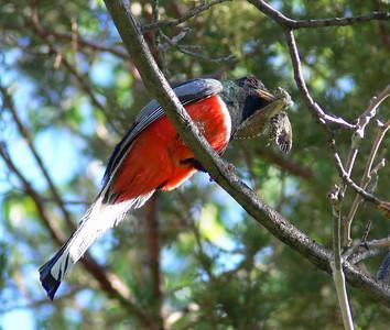 Bird Trips