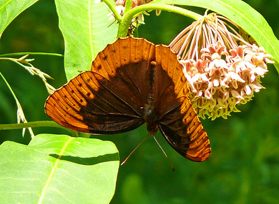 2016 Bath County Butterfly Count