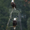Silver snag with eagles