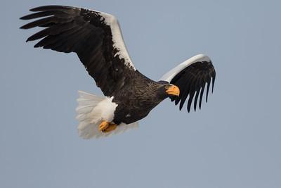 Eagle Season 2016/17