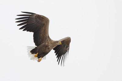 Eagle Season 2013/14