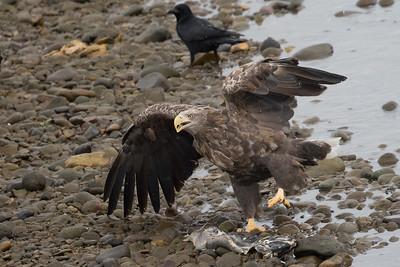 Eagle Season 2014/15
