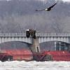 Eagles on the Mississippi