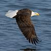 Destinguished Photo Toure Eagle 2016
