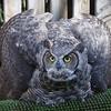 IMG_9040  I am a big bad owl!