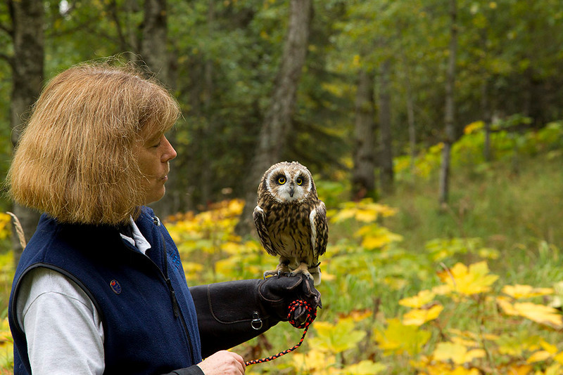 IMG_6726  Presenter Bev Cason with Flame the Short Eared Owl