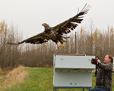 Bird Treatment & Learning Center