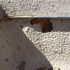 10 year old gravel-foam roof in Santa Fe.  Some bird and bee damage at coated section of roof.  (photo taken 2009)
