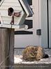 Birdhouse and cat, Tybee Island, GA (3)