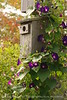 Birdhouse and morning glories, Maine (4)