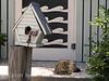 Birdhouse and cat, Tybee Island, GA (1)