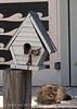 Birdhouse and cat, Tybee Island, GA (5)