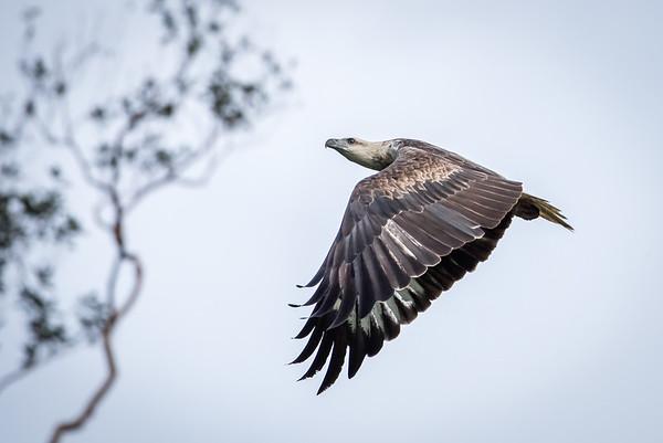 Sg Paka Kerteh Bird survey June 2016