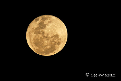 After witnessing the harriers roost for the night, it was a half-hour drive home...very happy to be greeted by this big, full bright yellow moon......