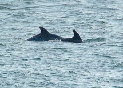 Dolphins off San Diego 2019