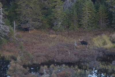 Bull Moose, Rangley ME