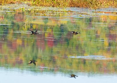 The Last Retreat, Lake Wilson, Wilton Maine, September 26,2020