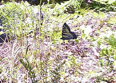 The Last Retreat Trail Cam