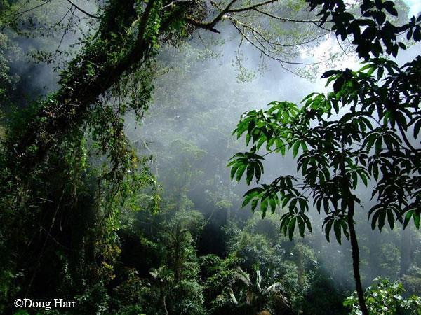 Los Quetzales Trail