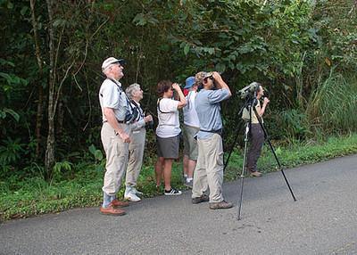 Birding Achiote Road