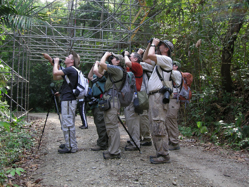 Looking for the Blue-crowned Manakin at Pipeline Road