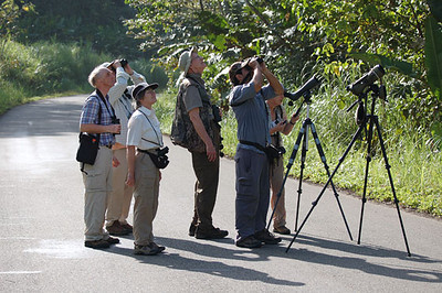 Looking for the Pied Puffbird at Achiote Road